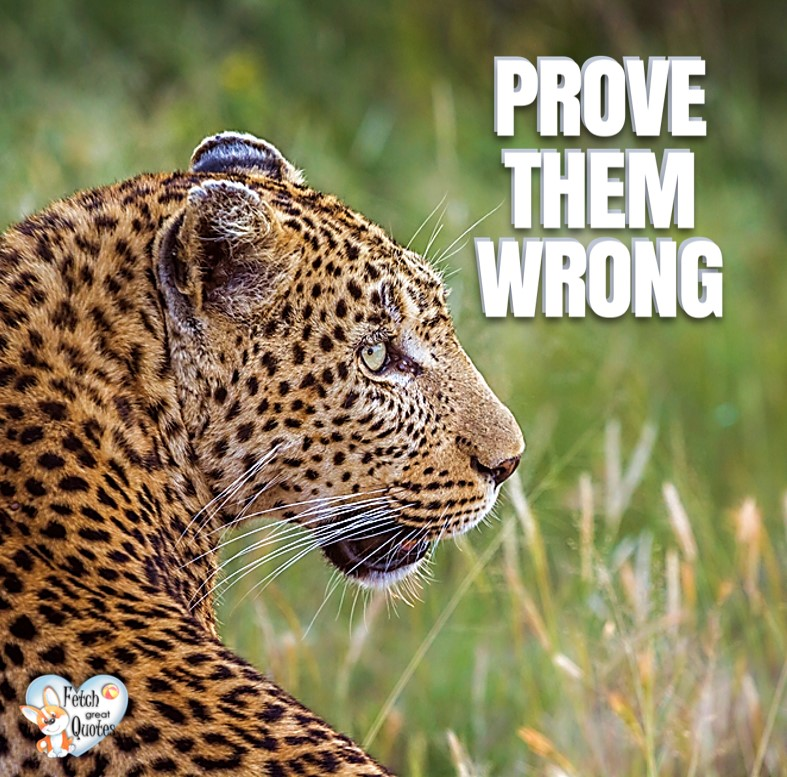 Prove them wrong, Inspirational Quotes, motivational quotes, inspirational photo quotes, inspirational photos, motivational photo quotes, success, success quotes, success photos, wildlife photos