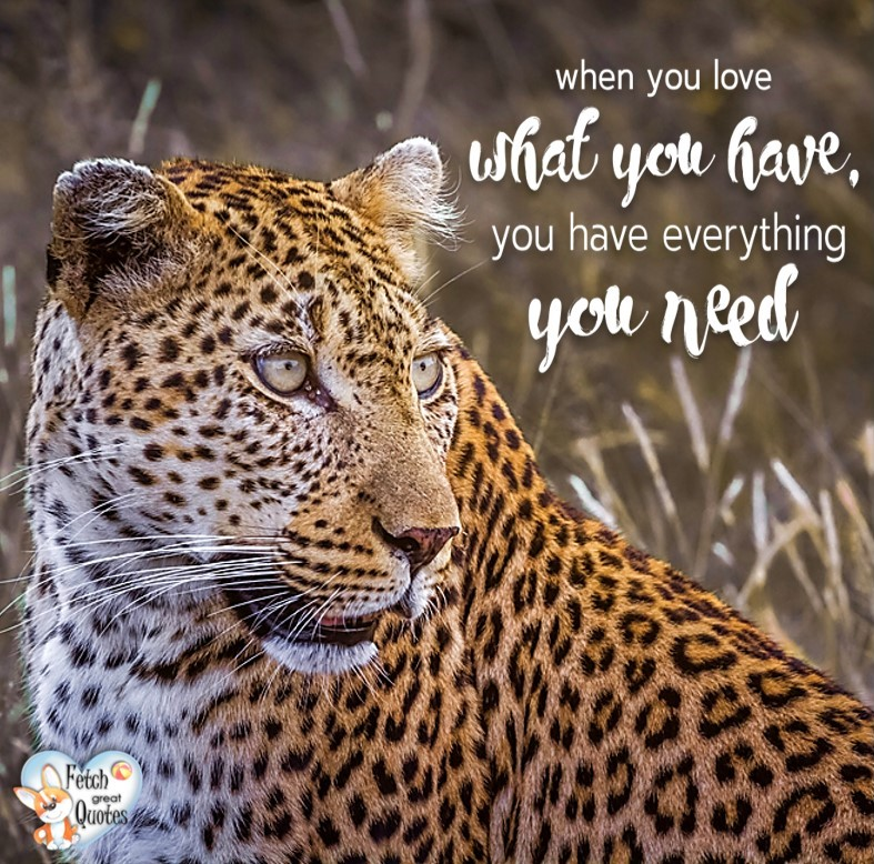 When you love what you have you have everything you need., Inspirational Quotes, motivational quotes, inspirational photo quotes, inspirational photos, motivational photo quotes, success, success quotes, success photos, wildlife photos