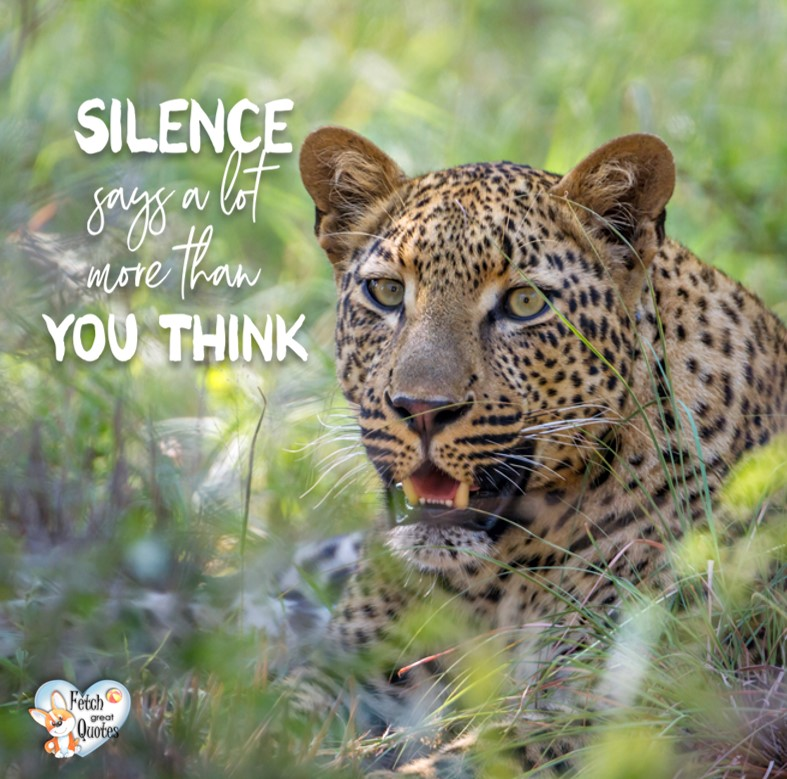 Inspirational Quotes, motivational quotes, inspirational photo quotes, inspirational photos, motivational photo quotes, success, success quotes, success photos, wildlife photos, Silence says a lot more than you think.