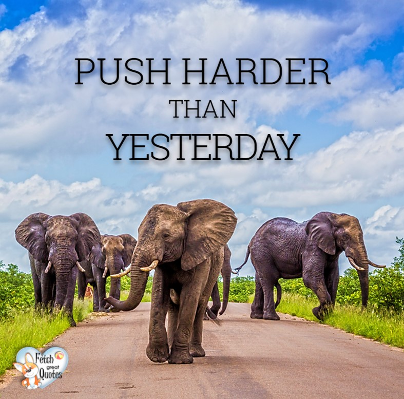 Push harder than yesterday. , Inspirational Quotes, motivational quotes, inspirational photo quotes, inspirational photos, motivational photo quotes, success, success quotes, success photos, wildlife photos