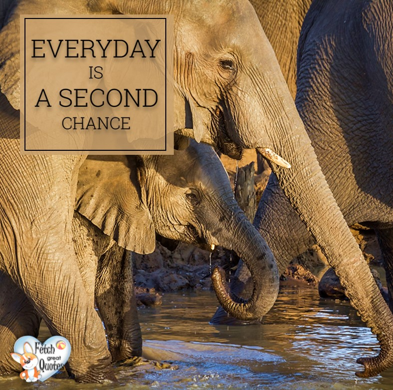 Every day is a second chance., Inspirational Quotes, motivational quotes, inspirational photo quotes, inspirational photos, motivational photo quotes, success, success quotes, success photos, wildlife photos