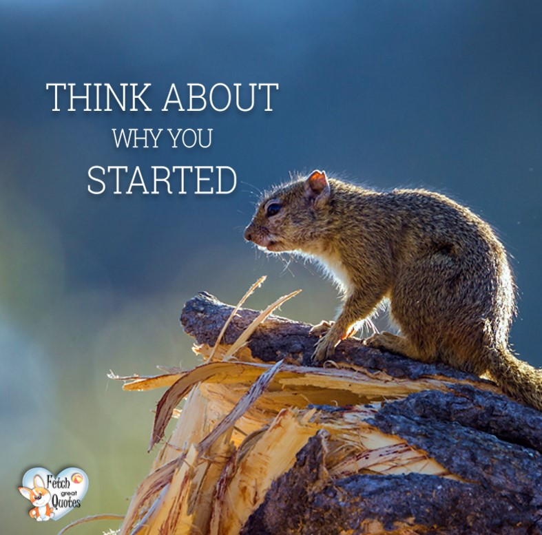 Think about why you started. , Inspirational Quotes, motivational quotes, inspirational photo quotes, inspirational photos, motivational photo quotes, success, success quotes, success photos, wildlife photos
