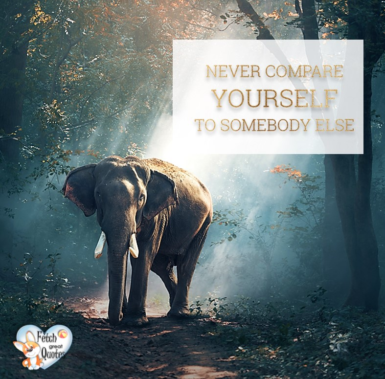Never compare yourself to somebody else., Inspirational Quotes, motivational quotes, inspirational photo quotes, inspirational photos, motivational photo quotes, success, success quotes, success photos, wildlife photos