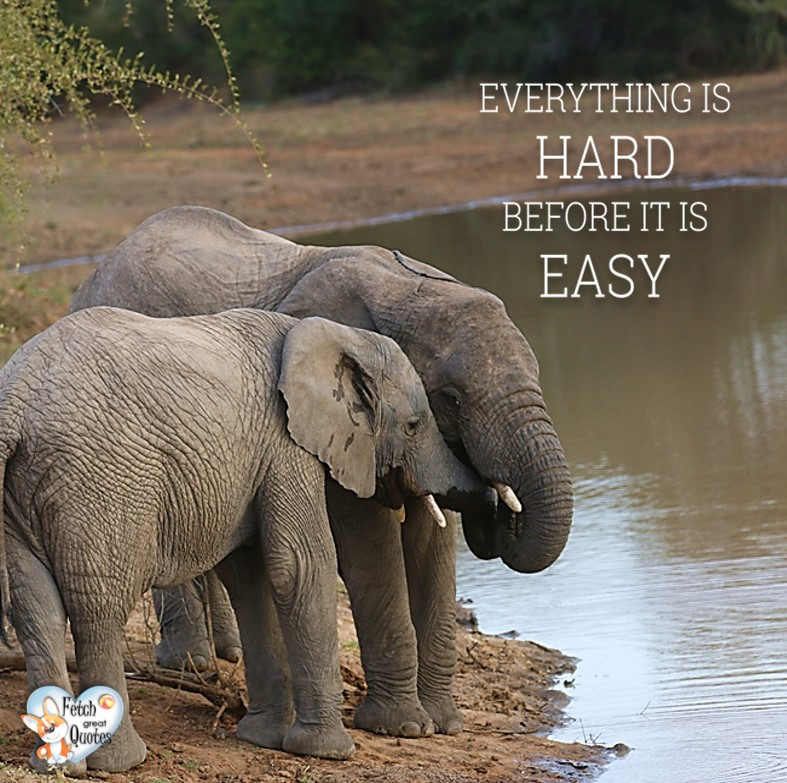 Everything is hard before it is easy., Inspirational Quotes, motivational quotes, inspirational photo quotes, inspirational photos, motivational photo quotes, success, success quotes, success photos, wildlife photos