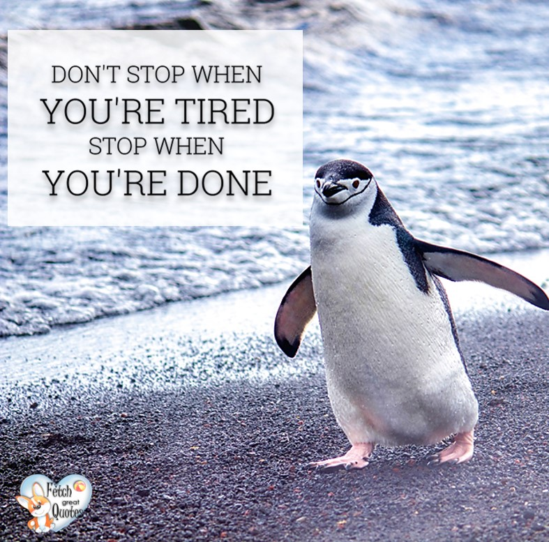 Don't stop when you're tired. Stop when you're done. , Inspirational Quotes, motivational quotes, inspirational photo quotes, inspirational photos, motivational photo quotes, success, success quotes, success photos, wildlife photos