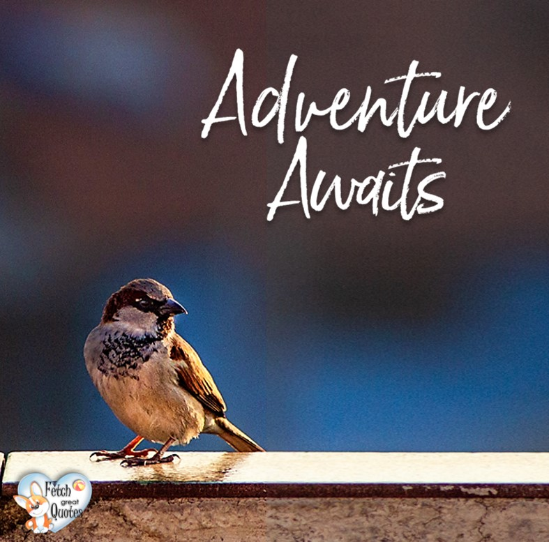 Adventure awaits., Inspirational Quotes, motivational quotes, inspirational photo quotes, inspirational photos, motivational photo quotes, success, success quotes, success photos, wildlife photos
