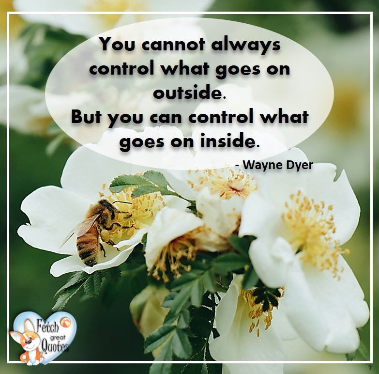 Wayne Dyer Quotes, Self-Development, Spiritual Development, Inspirational Quotes, Inspirational photo, Motivational Quotes, Motivational Photos, You cannot alway control what goes on outside. But you can control what goes on inside. - Wayne Dyer