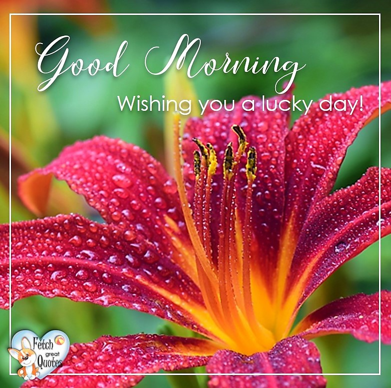 Tiger Lily, Red lilly, Wishing you a lucky day, Red flower, Spring Good Morning photo, Free Good Morning photo, Flower Photo, Spring Flowers