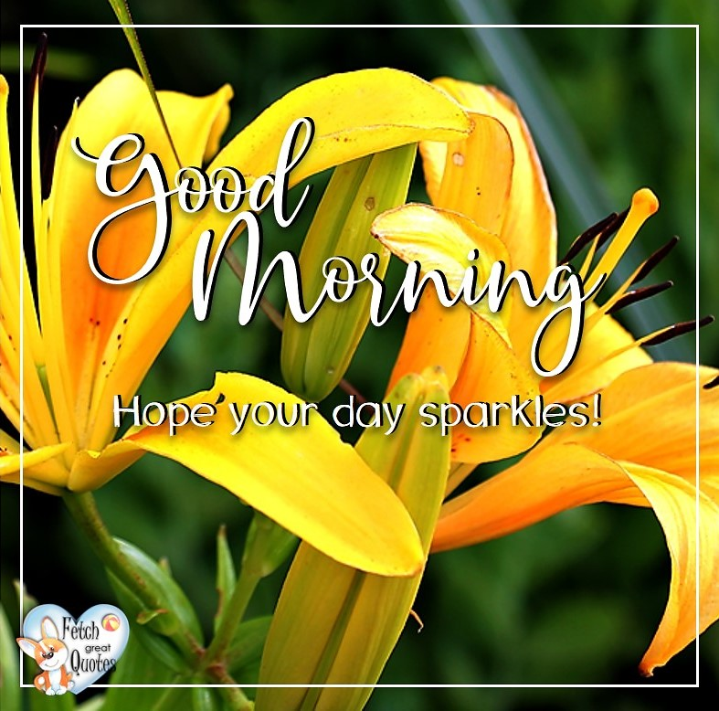Yellow lilies, Yellow lilly, Hope your day sparkles, Spring Good Morning photo, Free Good Morning photo, Flower Photo, Spring Flowers