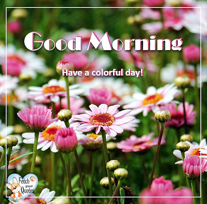 Pink flowers, Daisy, Pink daisies, Spring Good Morning photo, Free Good Morning photo, Flower Photo, Spring Flowers, Have a colorful day!