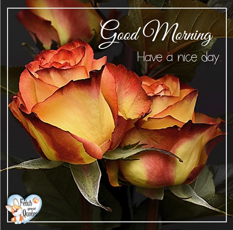 Orange roses, roses, Have a nice day, Spring Good Morning photo, Free Good Morning photo, Flower Photo, Spring Flowers