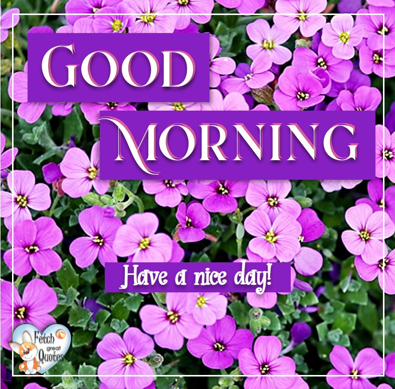 Pink and purple flowers, Have a nice day, Spring Good Morning photo, Free Good Morning photo, Flower Photo, Spring Flowers