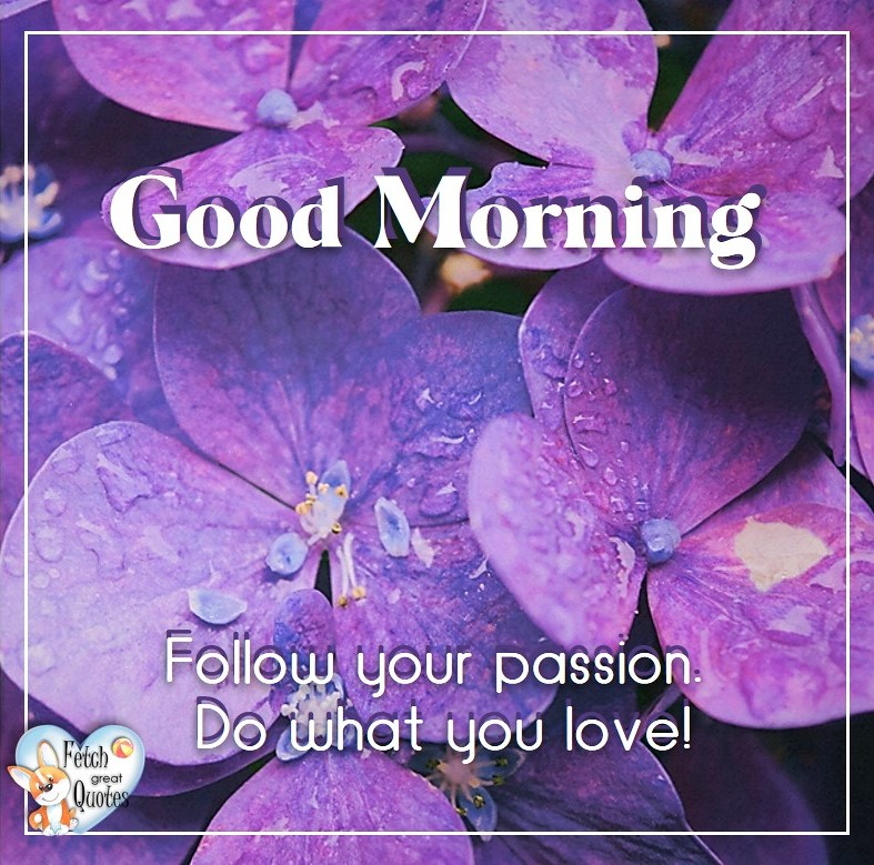 Purple hydrangea, purple flowers, Follow you passion. Do what you love! Spring Good Morning photo, Free Good Morning photo, Flower Photo, Spring Flowers