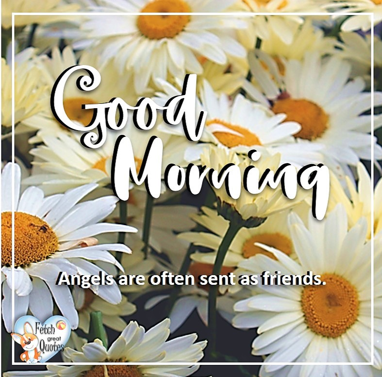Daisies, daisy, angles are often sent as friends, Spring Good Morning photo, Free Good Morning photo, Flower Photo, Spring Flowers