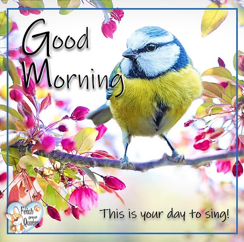 Spring Good Morning photo, Free Good Morning photo, Flower Photo, Spring Flowers, pink blossoms, blue bird, This is your day to sing!