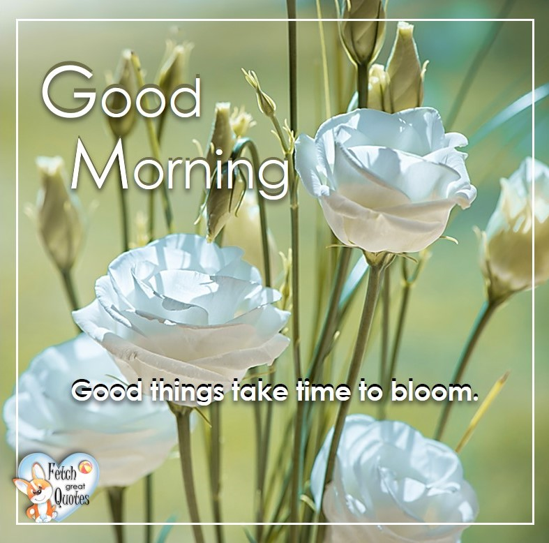 Spring Good Morning photo, Free Good Morning photo, Flower Photo, Spring Flowers, white roses, Good things take time to bloom.