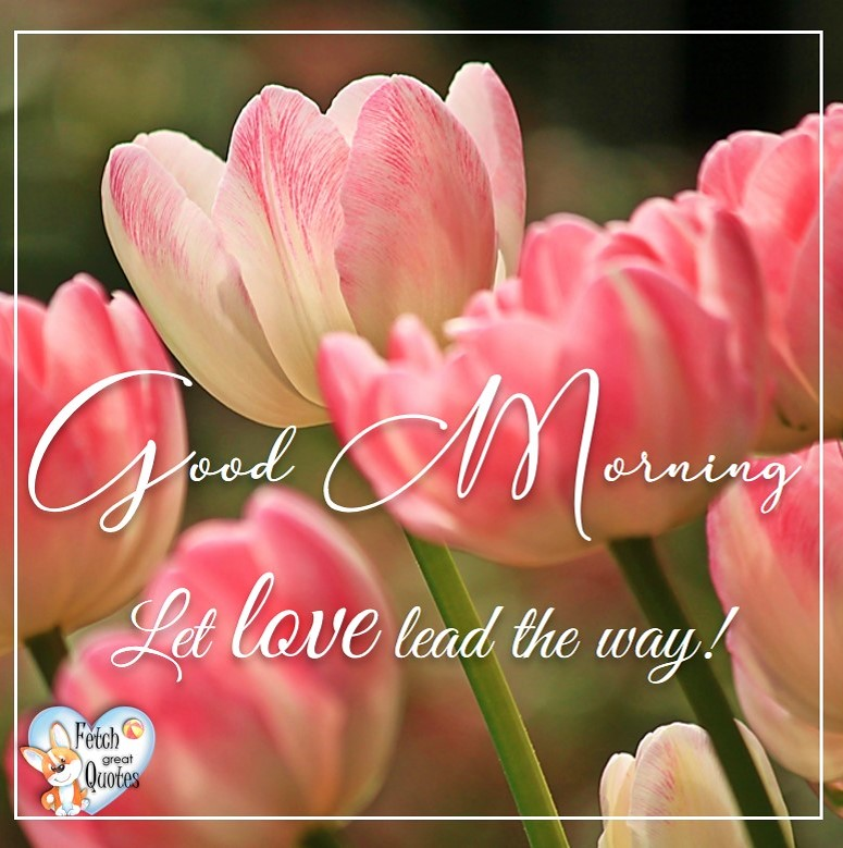 Spring Good Morning photo, Free Good Morning photo, Flower Photo, Spring Flowers, pink tulips, Let love lead the way!