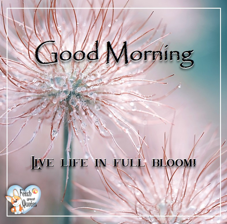 Spring Good Morning photo, Free Good Morning photo, Flower Photo, , live life in full bloom