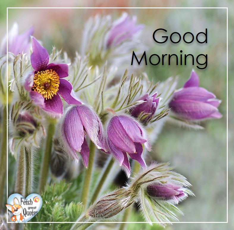 Spring Good Morning photo, Free Good Morning photo, Flower Photo, purple flowers
