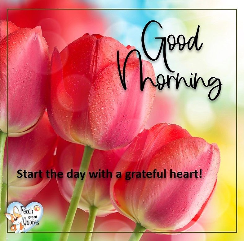 Spring Good Morning photo, Free Good Morning photo, Flower Photo, Red Tulips, Start with a grateful heart