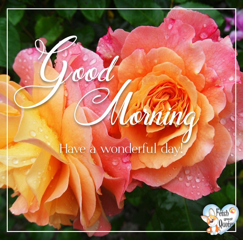 Peace roses, Pink and orange roses, peace rose, Spring Good Morning photo, Free Good Morning photo, Flower Photo, Spring Flowers